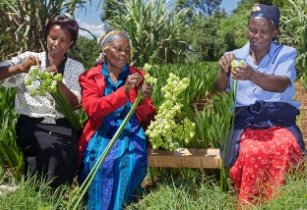 AfDB�s small-scale horticulture project benefits Kenyan farmers